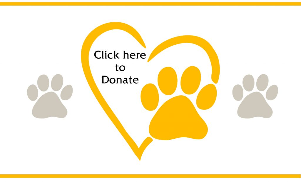 Donate paw long copy