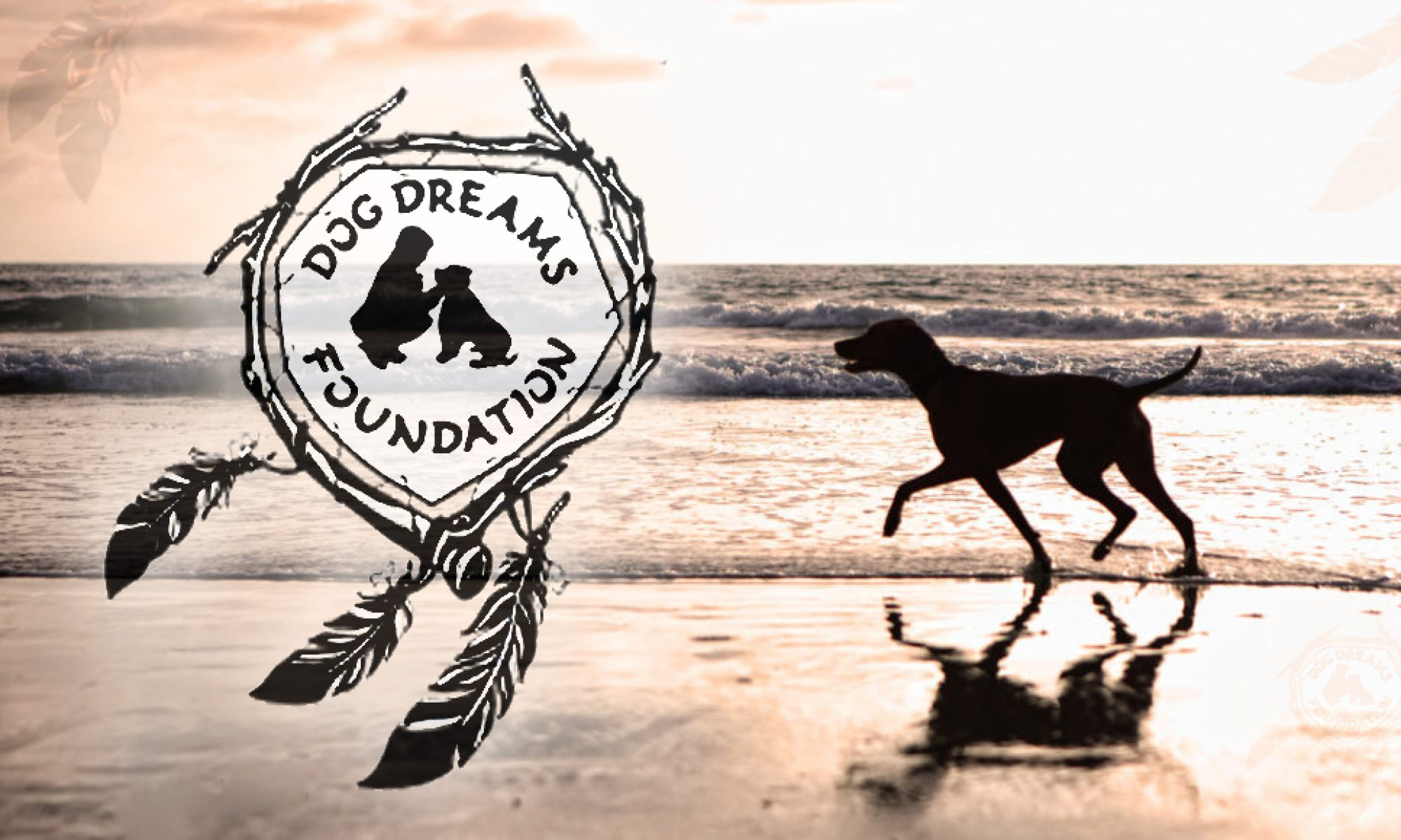 Dog Dreams Foundation