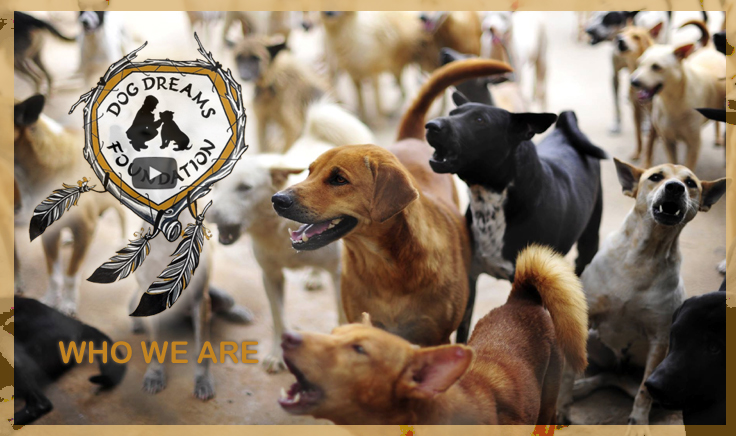 Dog Dreams Foundation About